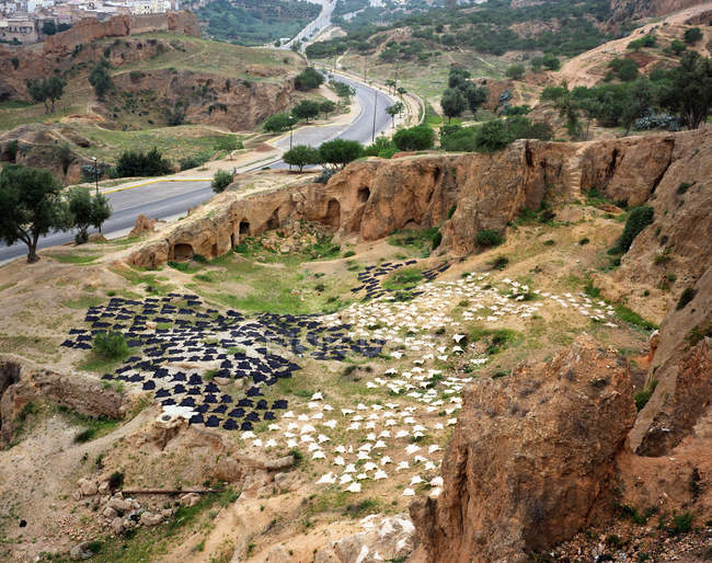 Загорелые животные прячутся на склоне холма — стоковое фото