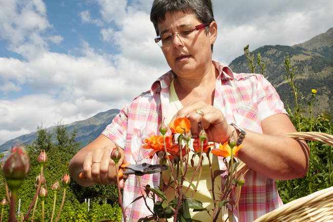 Woman trimming flowers in garden — Stock Photo