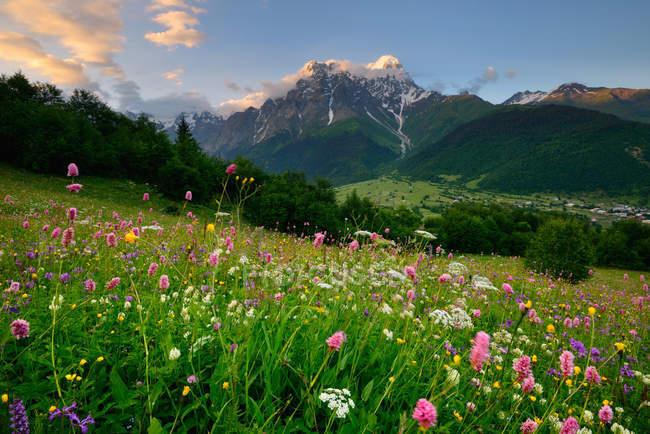 Prairie aux fleurs sauvages, village Mazeri, Svaneti, Géorgie — Photo de stock
