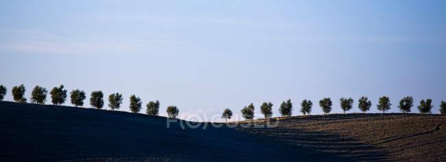 Alberi nel campo della Valle D'Orcia — Foto stock