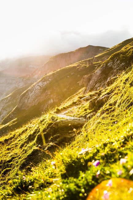 Soleil levant sur la colline rurale herbeux — Photo de stock
