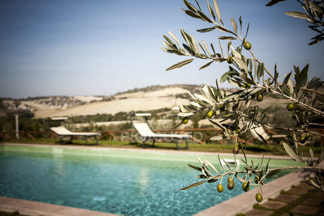 Olive tree and pool — Stock Photo