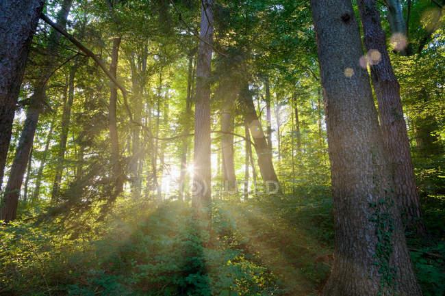 Sun shining through trees — Stock Photo