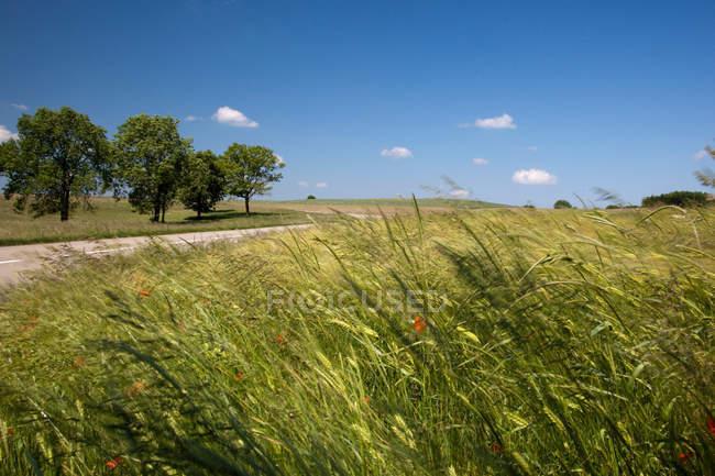 Сельская местность в регионе Юра Франции — стоковое фото