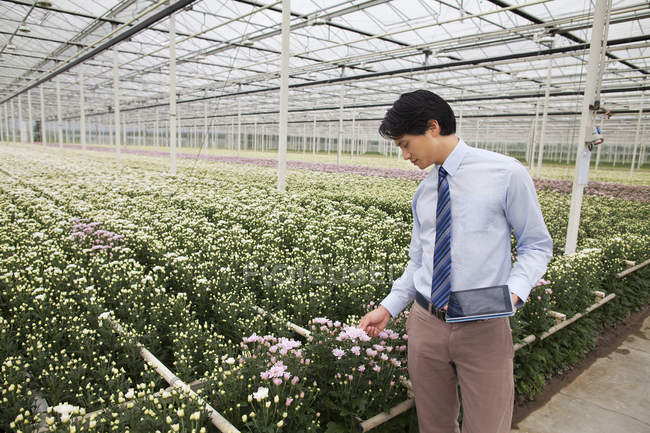 Man looking at rows of plants in greenhouse — Stock Photo