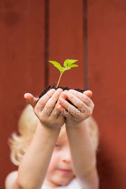 Girl holding seedling outdoors — Stock Photo