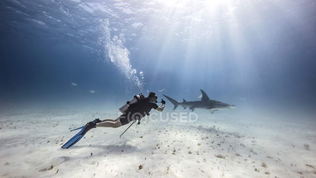 Underwater view of male diver watching shark near seabed — стоковое фото