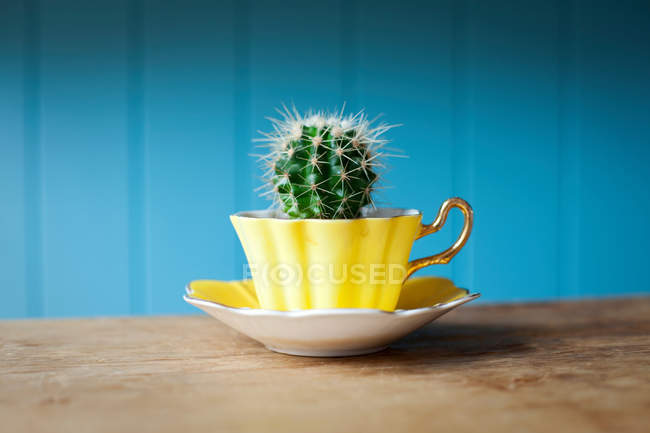 Cactus growing in teacup — Stock Photo