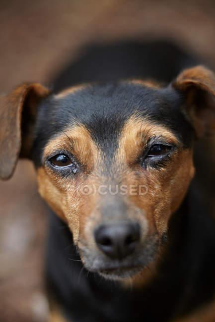 Close up shot of dog head — Stock Photo