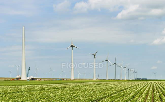 Ветряные турбины на зеленом поле под голубым облачным небом — стоковое фото