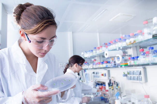 Biology student looking at petri dish — Stock Photo