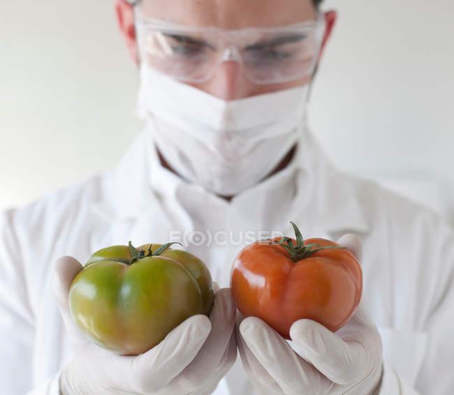 Учёный, изучающий помидоры в лаборатории — стоковое фото