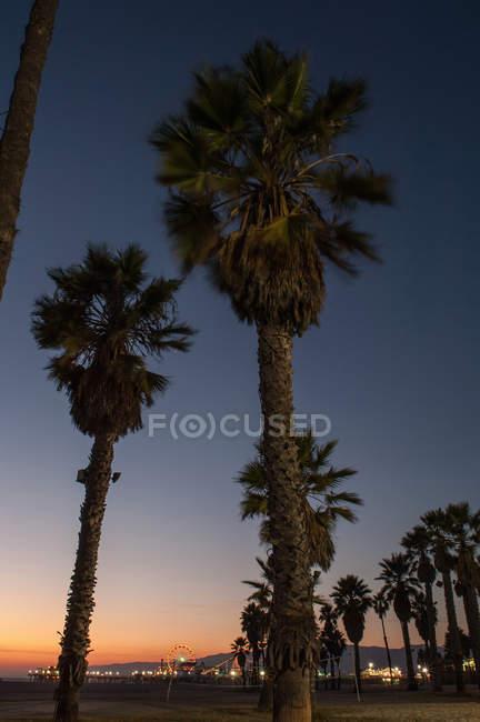 Пальмові дерева з нічне небо — стокове фото