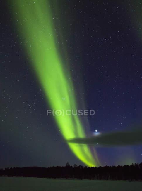 Northern Lights illuminated sky over woods — Stock Photo