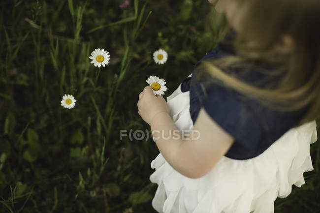 Over shoulder view of girl picking daisy flowers — Stock Photo