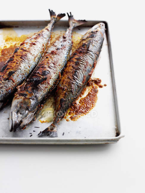 Close-up view of pan of grilled fish — Stock Photo