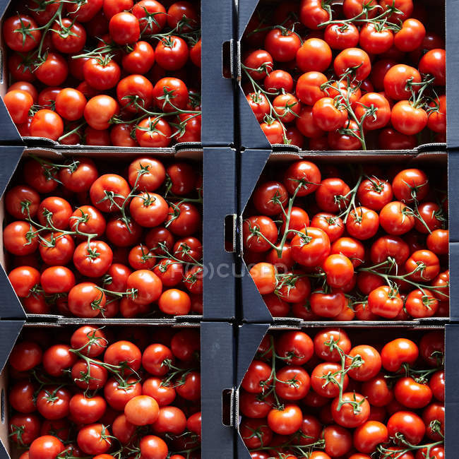 Packages of cherry tomatoes — Stock Photo