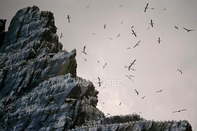 Sea birds roosting — Stock Photo