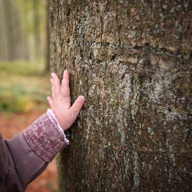 Kleinkind streift Baum im Park, Nahaufnahme — Stockfoto