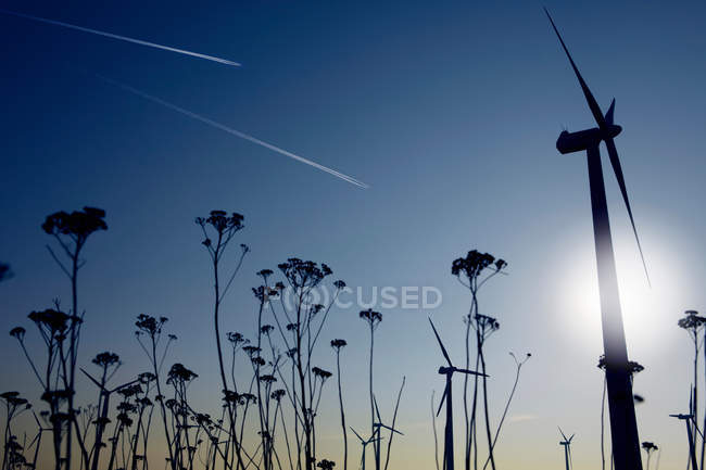 Растения и ветровых турбин — стоковое фото