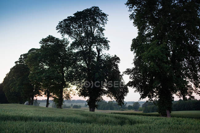 Árvores que crescem na estrada rural — Fotografia de Stock