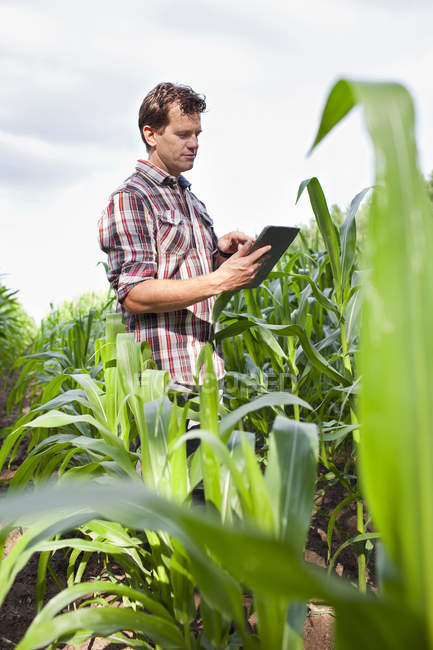 Farmer standing in field of crops using digital tablet — Stock Photo