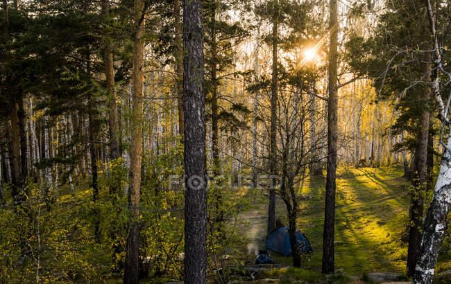 Persone sedute vicino alla tenda in campeggio al tramonto nella foresta — Foto stock