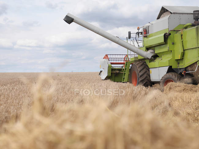 Combine harvester working in wheat field — Stock Photo