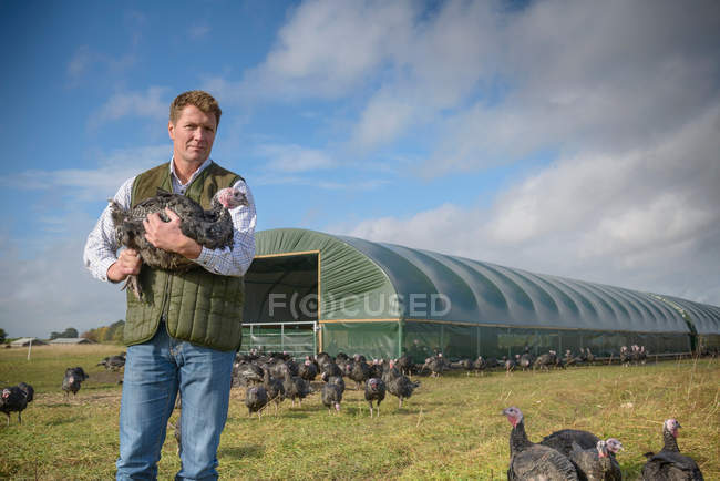 Portrait of farmer holding turkey on free range turkey farm with farm building in background — Stock Photo