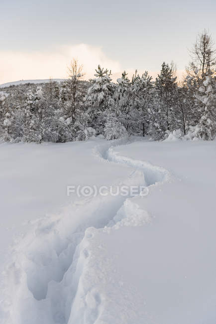 Diminishing perspective of trail through deep snow and snowcapped trees — Stock Photo