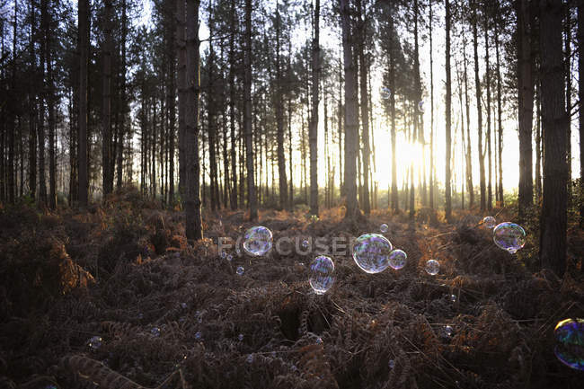 Soap bubbles floating in sun lighted forest — Stock Photo