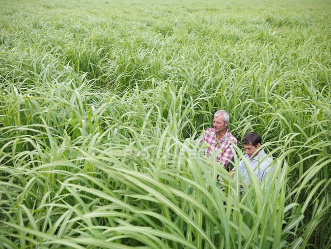 Agricoltori con combustibile a biomassa Miscanthus per la combustione in centrale elettrica — Foto stock