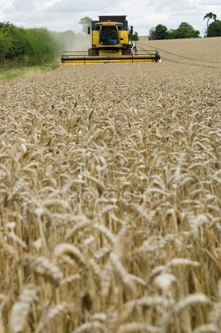 Зерноуборочный комбайн в поле пшеницы — стоковое фото