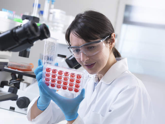 Scientist  viewing experimental cultures growing in multiwell tray in laboratory — Stock Photo