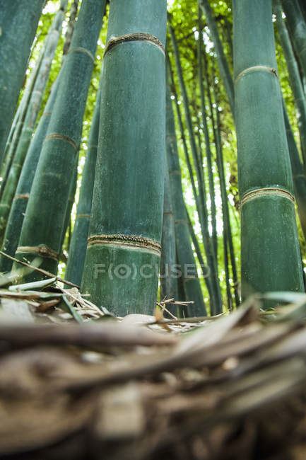 Surface level view of Bamboo — Stock Photo