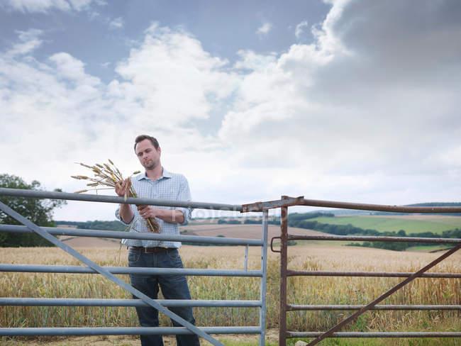 Landwirt inspiziert Ernte auf Hof — Stockfoto