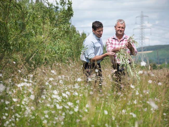 Agricoltori con biomassa salice a combustibile (salice) per la combustione in centrale elettrica — Foto stock