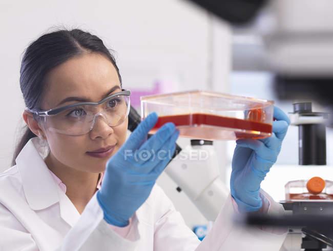 Científica examinando cultivos celulares creciendo en un frasco de cultivo en el laboratorio - foto de stock