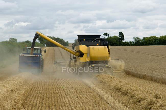 Комбайнеры разгружают пшеницу — стоковое фото
