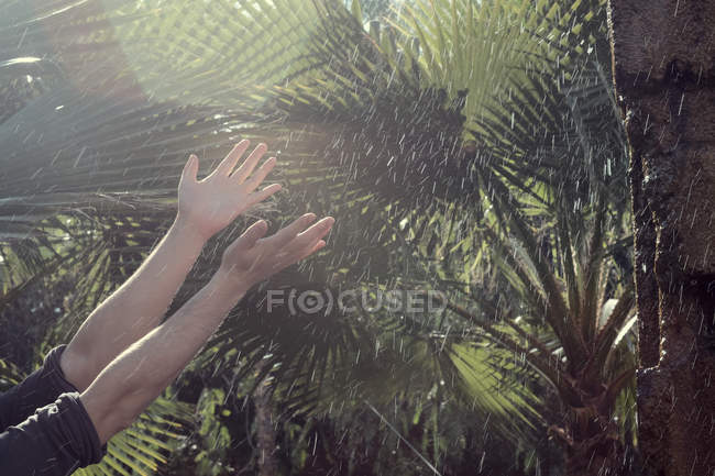 Side view of man's hands amongst water droplets and tropical garden plants — Stock Photo