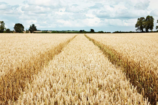 Paths carved in field — Stock Photo