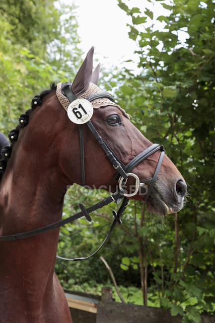 Портрет голова лошади с шестьдесят один номер — стоковое фото