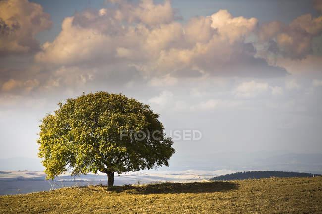 View of tree and landscape, Volterra, Tuscany, Italy — Stock Photo