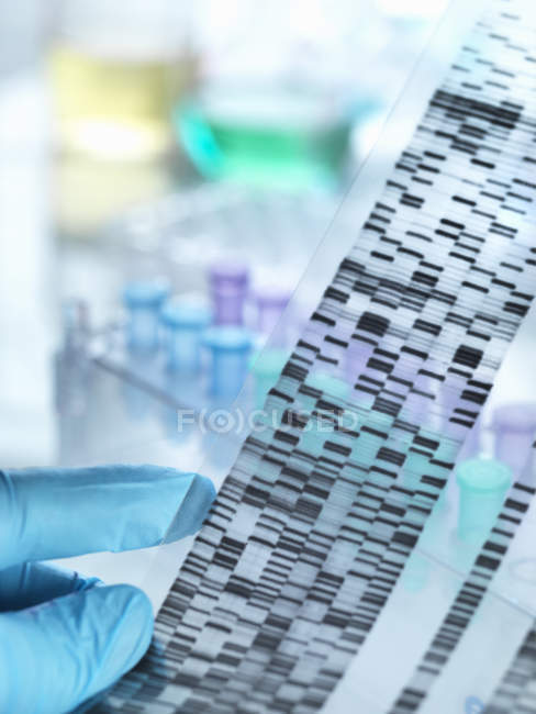 Scientist holding DNA gel in front of samples for testing in laboratory — Stock Photo