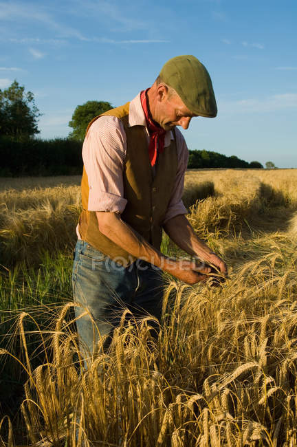 Mature farmer working in field of barley — Stock Photo