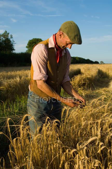 Fermier mûr travaillant dans le domaine de l'orge — Photo de stock
