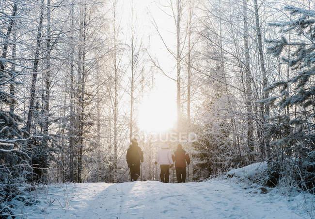Три людини нордичної ходьби в засніженій лісі — стокове фото