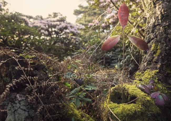 Низкий угол зрения листья стебля, форменн как ветротурбины — стоковое фото