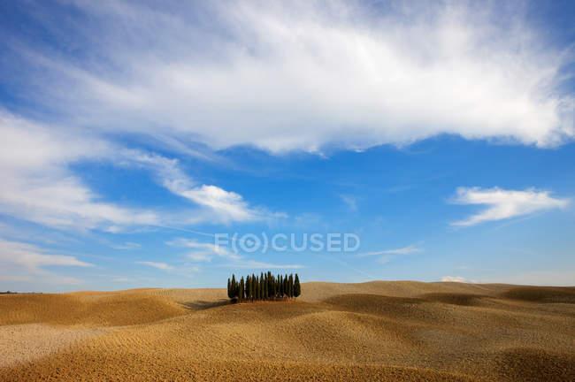 Árvores de cedro, no vale de orcia Outono sob céu azul nublado — Fotografia de Stock