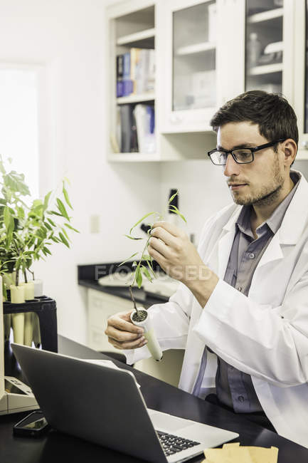 Scientist examining plant in laboratory at plant growth research facility — Stock Photo